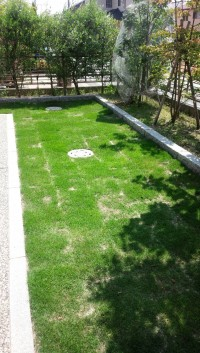 芝生アフター